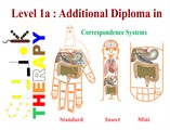 Level 1A: Additional Diploma in Sujok Therapy