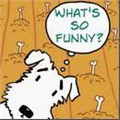 What's So Funny? Jokes for Teaching and Learning English